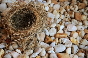 Financial Planning for the Empty Nester
